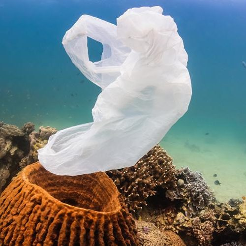 plastic bag in coral reef