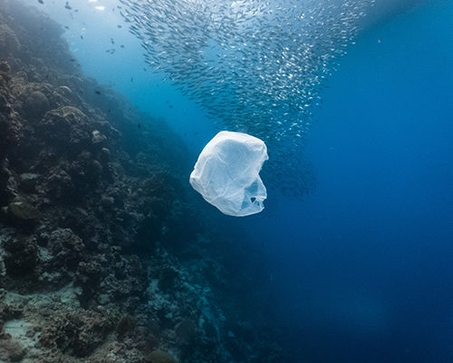 single-use plastic bag floating in the ocean
